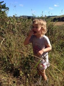 Jolan picking blackberries