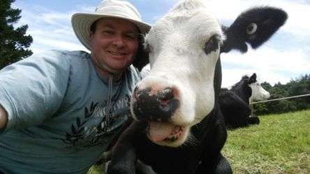 Pukeatua: Cruisy Cows